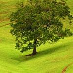 Nachweis Pflanzen, Bäume, Wurzeln, Holzarten