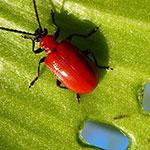 Nachweis Schädlinge und Parasiten