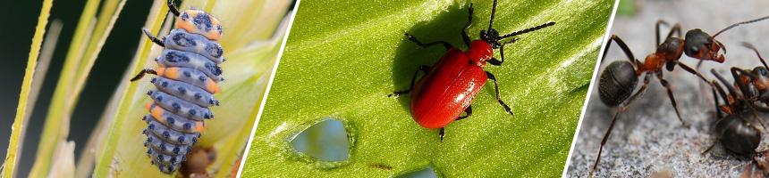 Schädlinge und Parasiten